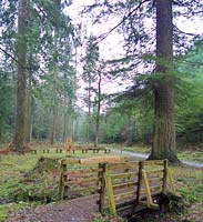 The Tall Trees Trail is suitable for wheel chairs and buggies
